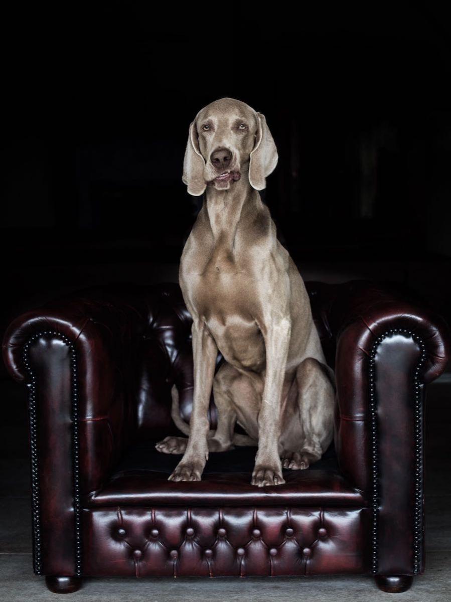 Mostra di cani 2017-11-10-photo-00000002.jpg..jpg