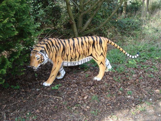 Tigre 638.jpg